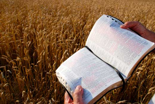 bible wheat field 520x348 | marketplace christianity