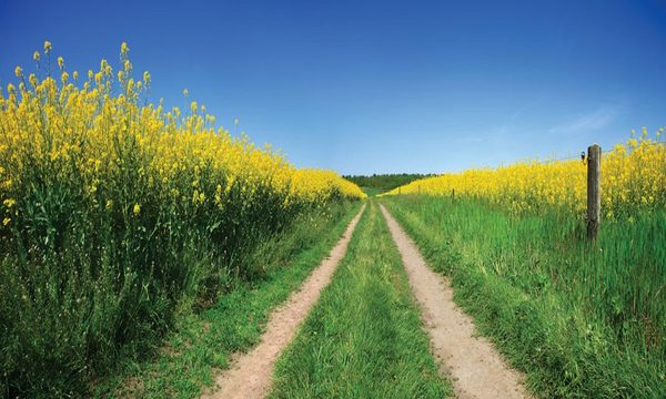 dirt road groves in field of flowers 600x360 | marketplace christianity