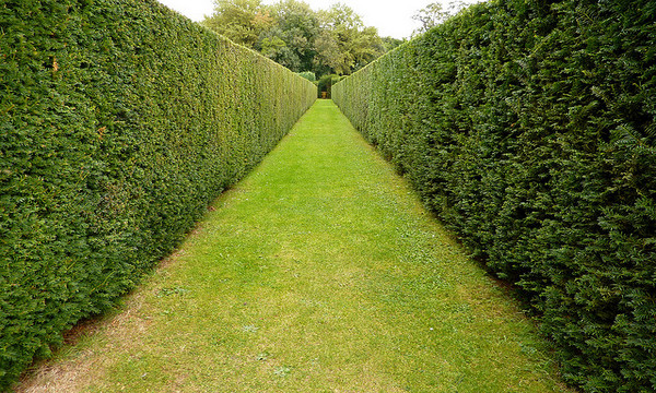 Image Gallery Sidewalk Hedges