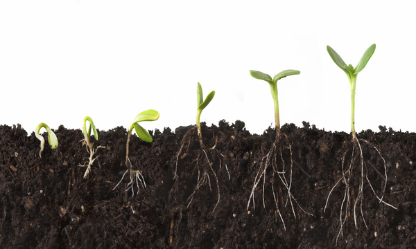How to Build & Maintain Your Hedge Fund   marketplace christianity